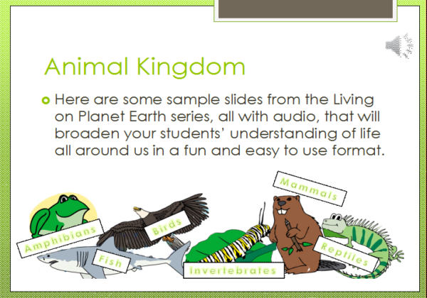 Animal kingdom | Recurso educativo 41715