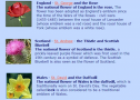 Symbols of England, Scotland and Wales | Recurso educativo 55596