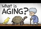 What is Ageing? | Recurso educativo 780872